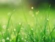 Was muss der richtige Rasensamen können damit aus ihm ein perfekter Garten wird