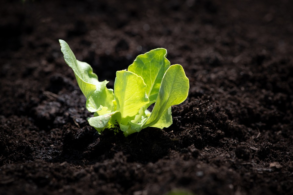 Spinat aus dem Growbox Komplettset